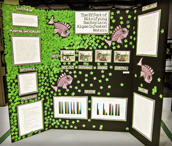 Science Design Project: Science Fair Project Display Boards