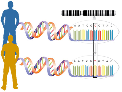 DNA mutations lead to genetic variation.