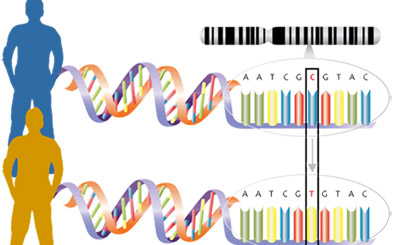 lesson plan genetic mutation thumbnail