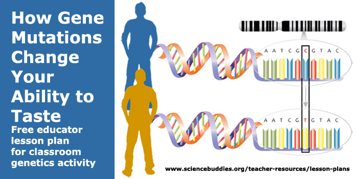 Genetic Mutation and Taste Lesson Plan | Science Buddies Blog