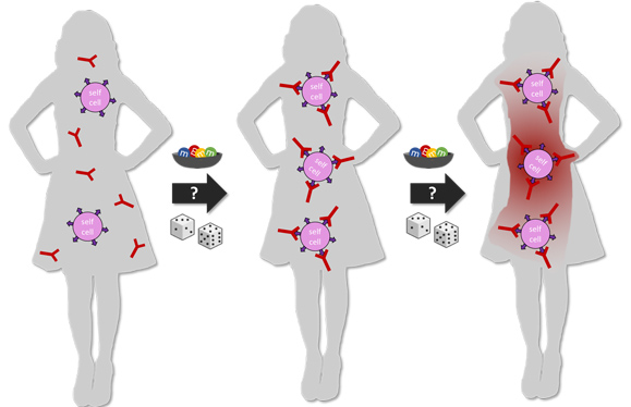 How the probability of dice and colored candy can relate to the statistics of autoimmune traits in humans in three stages