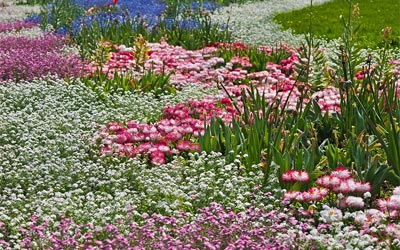 flowers meadow nature