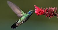 Hummingbird Food Favorites