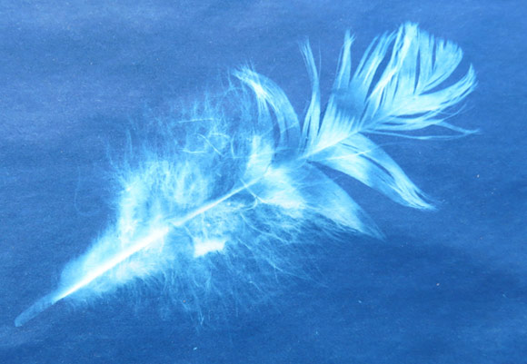 The result of a sunprint of one feather