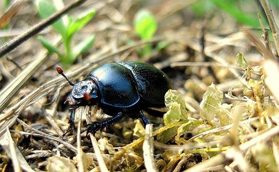 Beetle in its habitat illustrates this science activity on bug biodiversity.