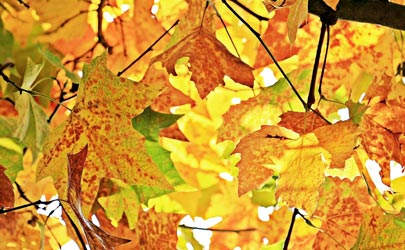 colored leaves thumbnail