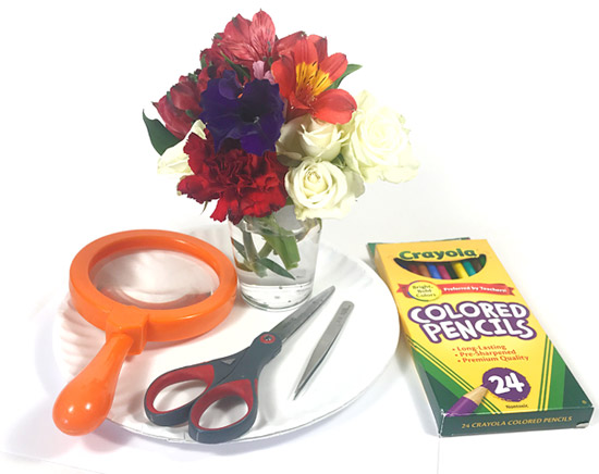 Materials needed for the flower dissecting activity.