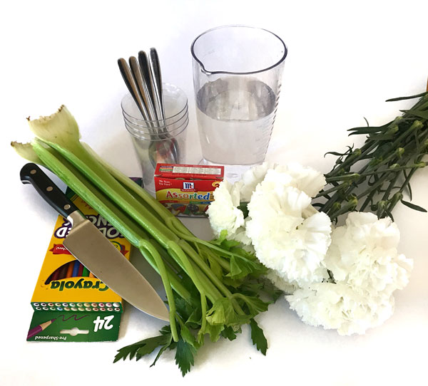 materials for dyed carnations activity