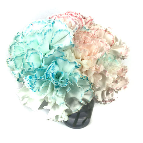 dyed carnations activity