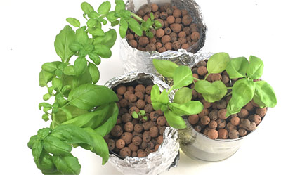 hydroponics with clay pellets for science project thumbnail