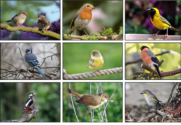 birds found in your back yard
