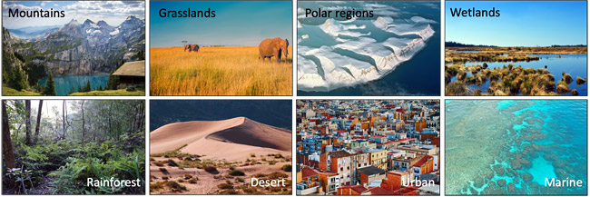 Examples of different animal habitats