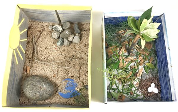 miniature real-life habitat for an animal examples