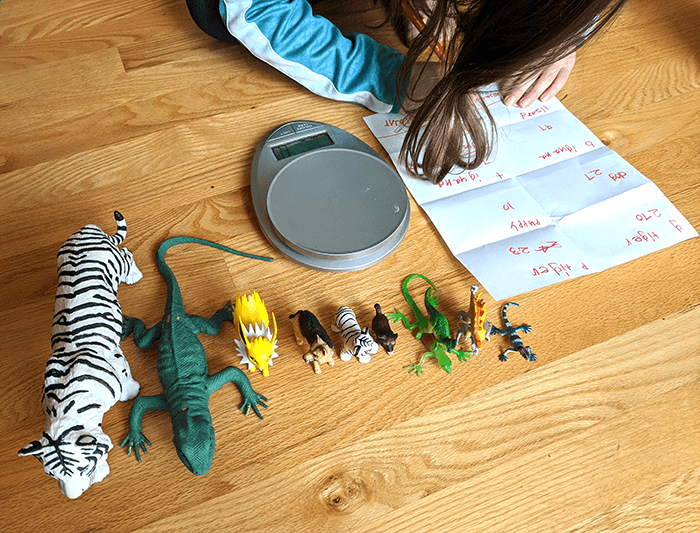 Student with line of toy animal figurines arranged by how much she thinks they weigh