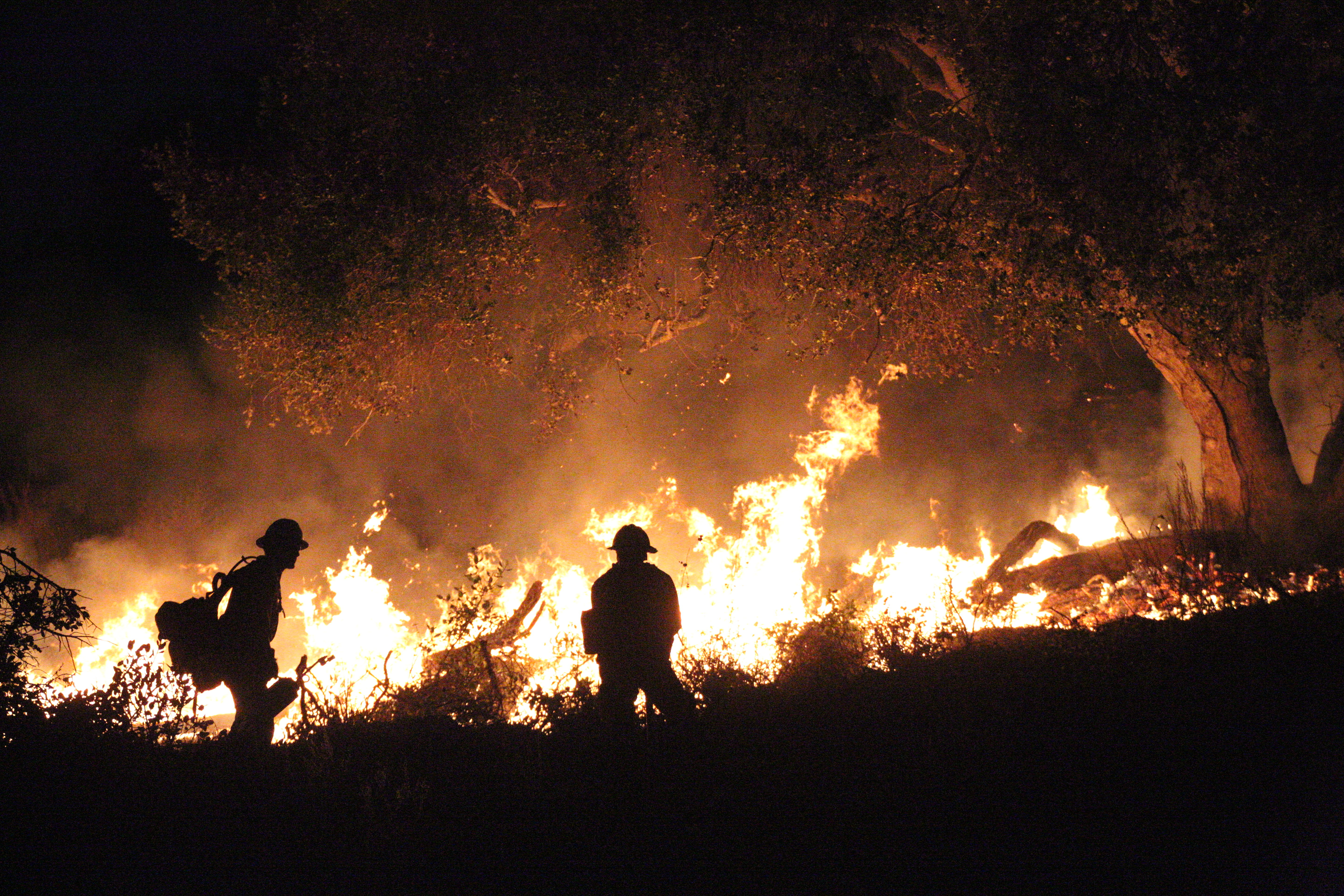 Forest rangers battling forest fire