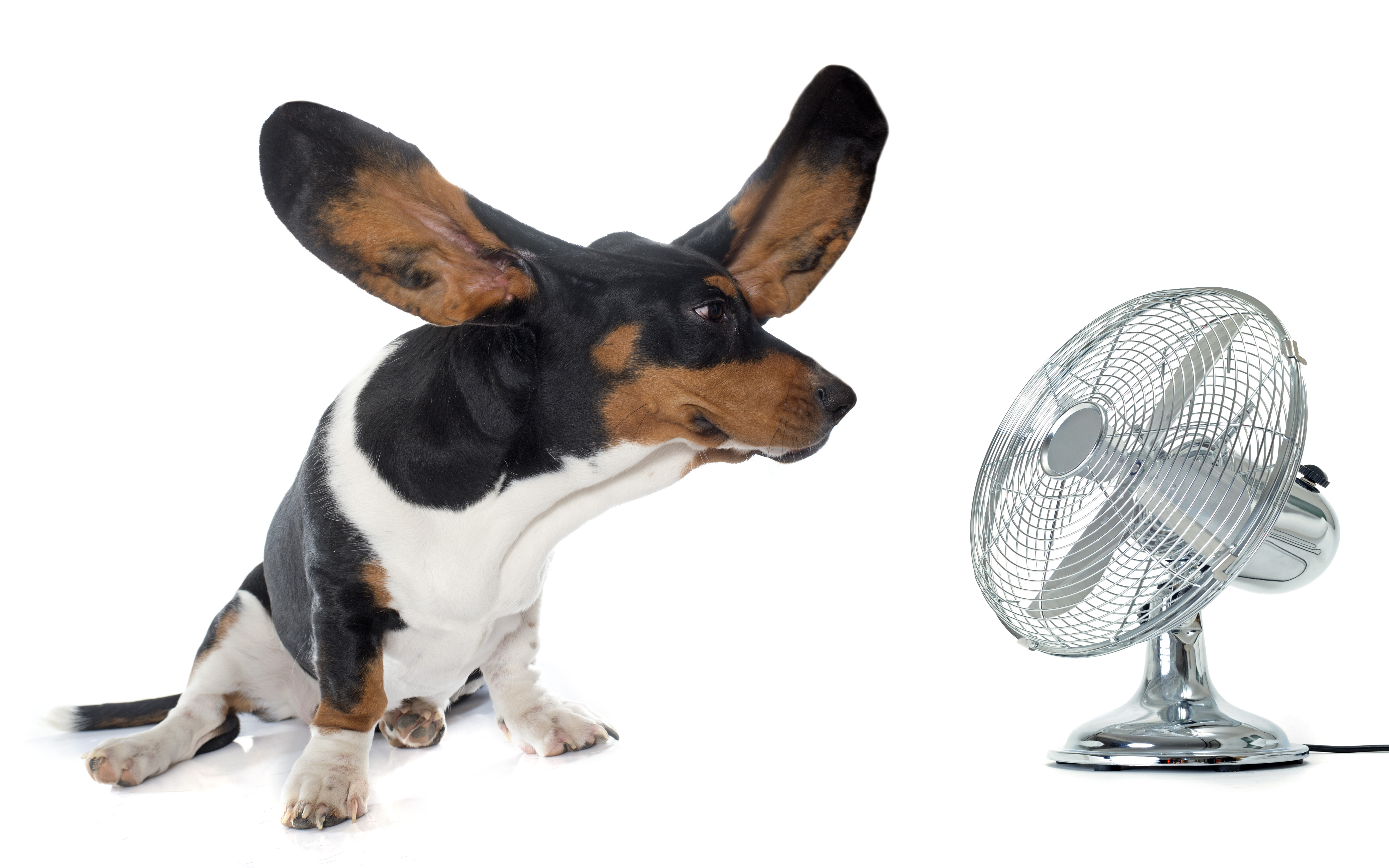 dog cooling off with electric fan
