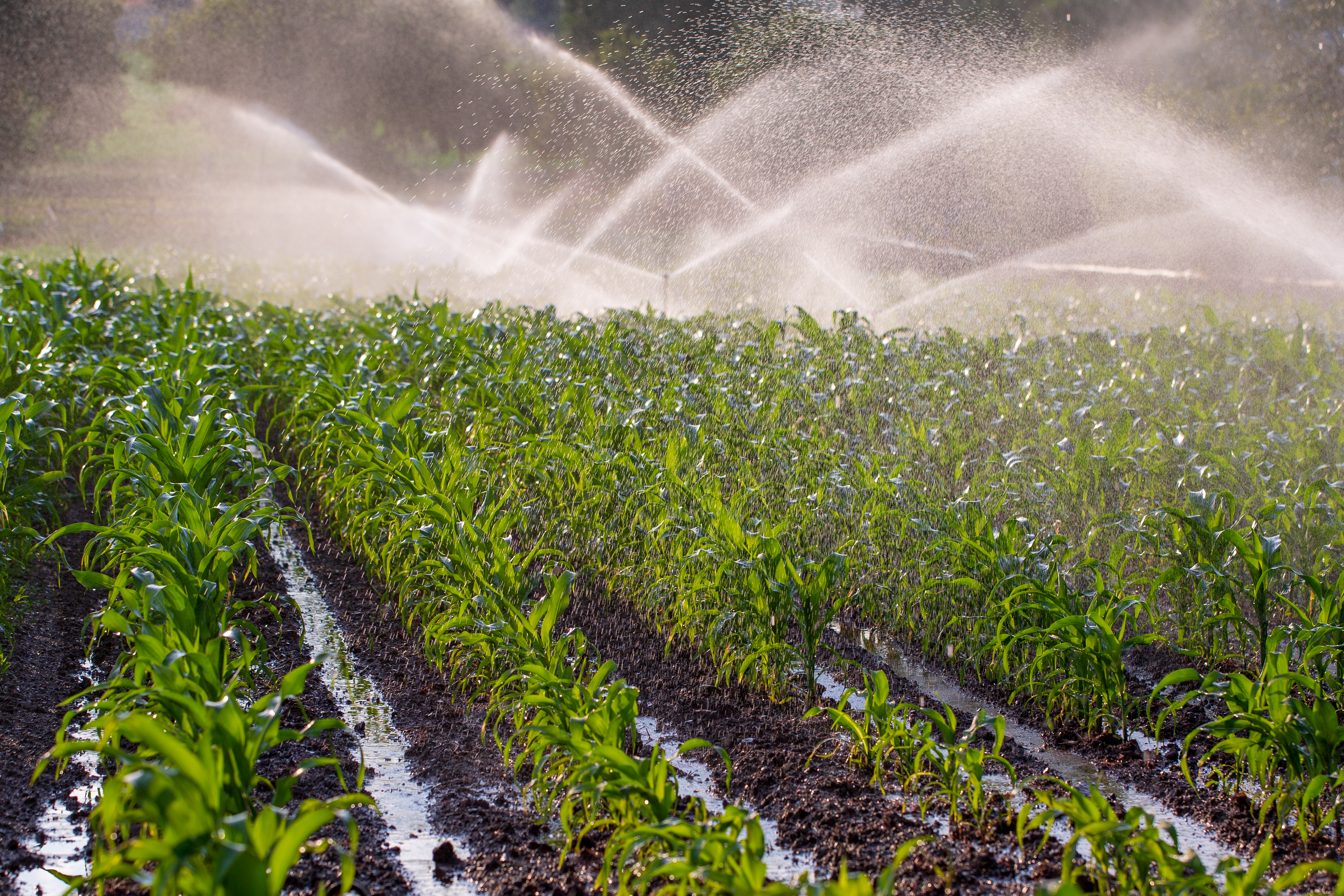 crops being irrigated with clean water