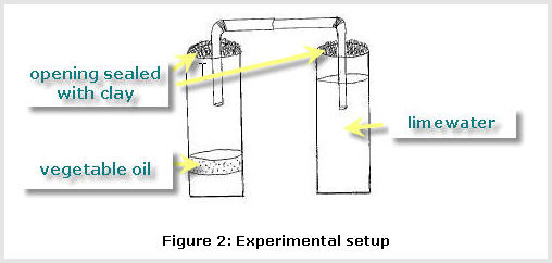 Experiment Set Up