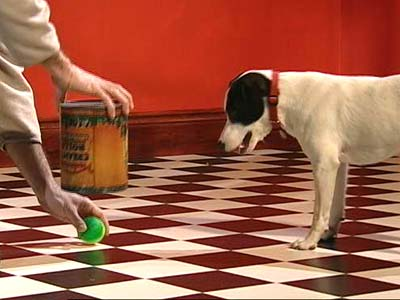 A ball is placed in front of a dog as it watches