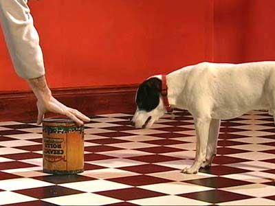 A ball is covered with a can as a dog watches