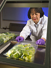 A scientist opens a bag of lettuce