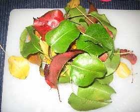 A pile of red, yellow and green leaves