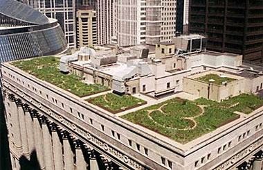 Environmental Engineering Science Project Photo of Chicago City Hall rooftop garden overview Spring 2003