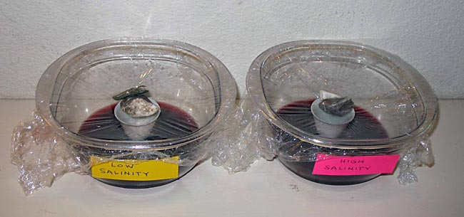 Environmental Engineering Science Project Here are two assembled desalinators filled with low- and high-salinity saltwater.