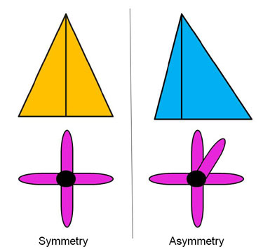 Two shapes with linear symmetry and two shapes that are asymmetrical