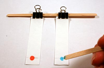 Drops of red and blue candy dye are placed on two chromatography strips