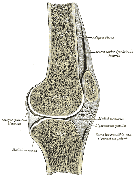 sagittal view of the knee joint