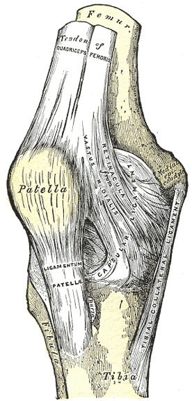 Anatomical drawing for the front-view of a knee with bones, tendons and ligaments labeled