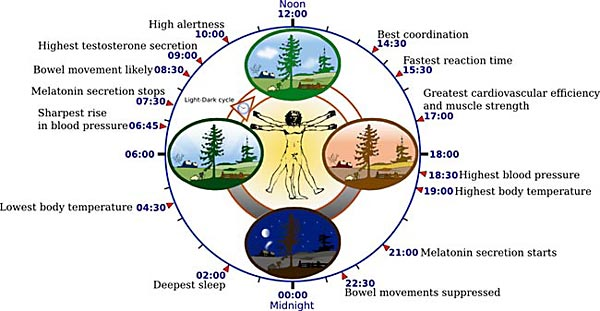 Mammalian Biology Science Project Overview of biological circadian clock in humans.