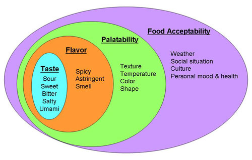 Food  Science Project different factors humans use to determine if a food is acceptable to eat or not