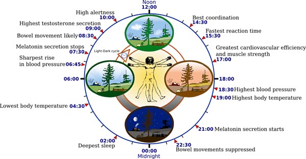 Overview of biological circadian clock in humans.