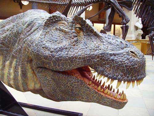 Model head of a Tyrannosaurus rex