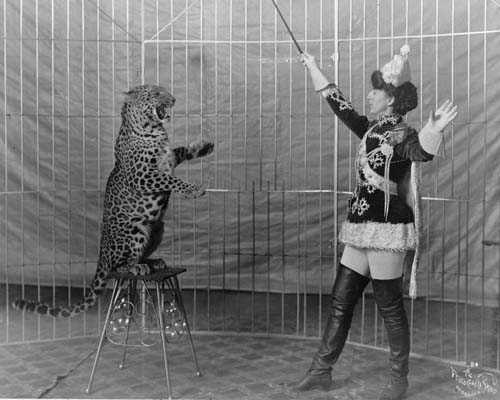 Image in black and white of a circus trainer teaching a leopard to sit upright on a stool