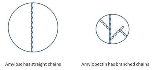 Drawing of side-by-side circles. The circle on the left is larger and has a single long chain inside. The circle on the right is smaller and has branched chains inside.