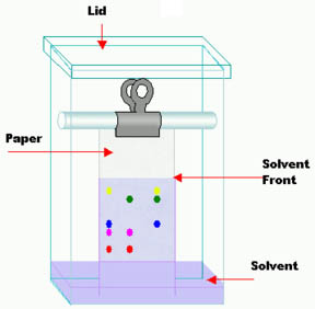 Diagram of a homemade paper chromatography testing box