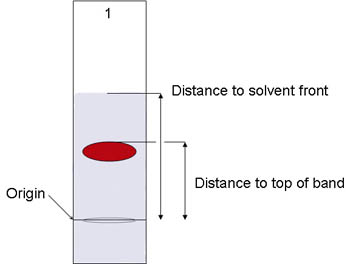 Diagram of a red pigment marking on a paper chromatography strip soaked in solvent