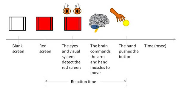 The definition of reaction time is presented through a timeline. First, a blank screen is presented to the user. This is followed by flashing a red screen (when measurement of the reaction time begins). In the next sequence, this red screen is detected by the visual system. An image of the brain is then shown given a command to the arm and hand muscles to move. The final tick in the timeline shows a hand pushing a button (when measurement of the reaction time ends).