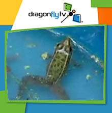 Watch DragonflyTV caves video