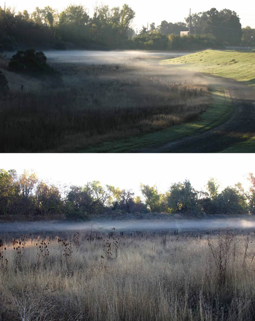 This image shows two photos of radiation fog over vegetation. One is a wide angle shot; the other is a close-up where the top and bottom of the fog layer is clearly visible.