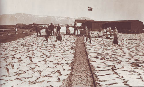 In this black and white photo from the 1800's, people are seen standing and kneeling outside beside large, flat pieces of fish that are drying on rocks in the sun and wind.