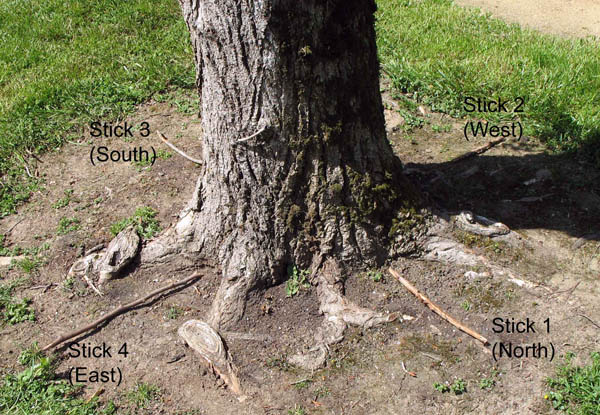 This photo shows a tree base with four sticks pointing out from its base in each of the four directions.