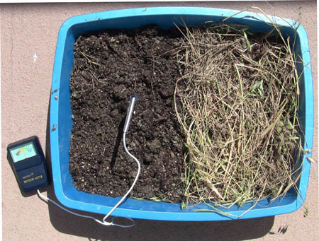 This photo shows a top down view of a rectangular plastic tray. The right side of the tray shows a layer of plant matter. The left side of the tray shows dirt that has been turned over and a moisture meter probe is sticking out of the middle of the turned over dirt.