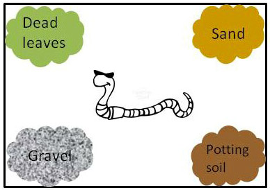 Squirmy wormy which soil type do earthworms like best for Different types of soil for kids