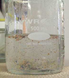 Beaker of ocean water with small bits of plastic from North Pacific Gyre.