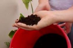 Fertilizer from human waste