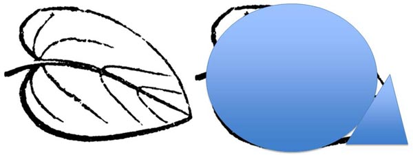 An oval and triangle overlay a drawing of a leaf